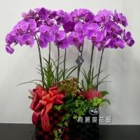 《春節花禮》招客迎財蝴蝶蘭花禮【CA006】