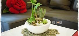 2013年10月份生活花藝美學教室~多肉植物盆栽設計