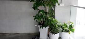 分享淨化室內空氣的好幫手‧高雄專業花店綺麗屋