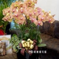 蝴蝶蘭花禮【CA029】