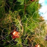 祈福聖誕樹