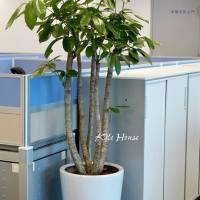 辦公室植物盆栽綠美化設計・高雄花店綺麗屋專業團隊
