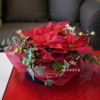 聖誕節盆花【HA012】