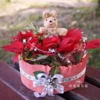 聖誕節盆花【HA014】
