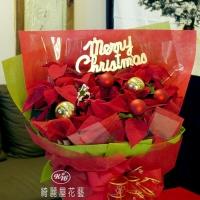 聖誕節盆花【HA015】