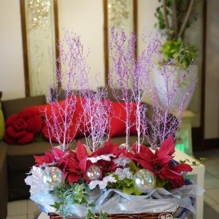 聖誕節盆花【HA016】