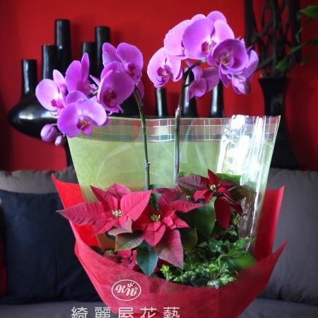 聖誕節盆花【HA017】