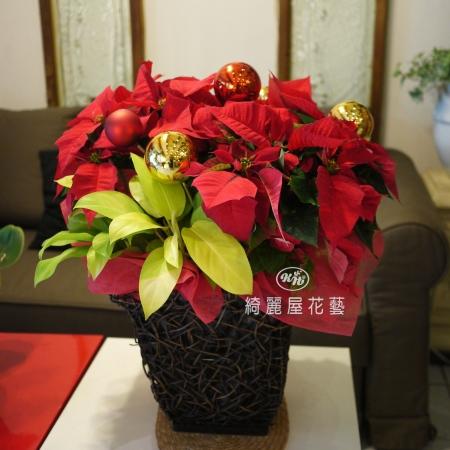 聖誕節盆花【HA018】