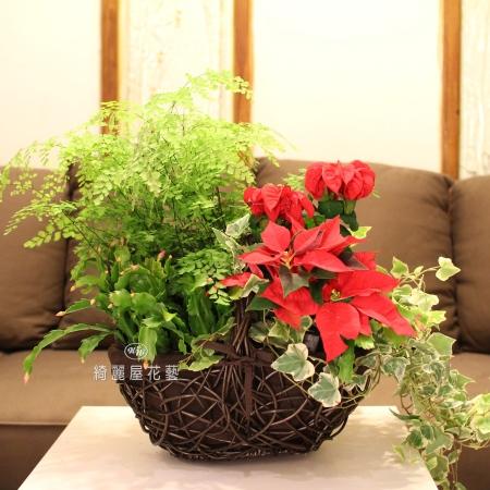 聖誕節盆花【HA019】