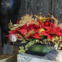 聖誕節盆花【HA020】
