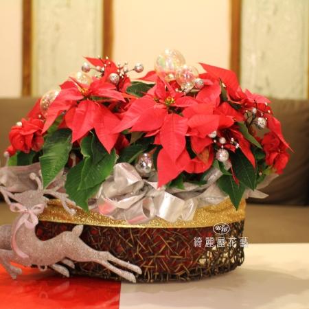 聖誕節盆花【HA021】