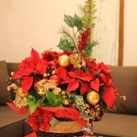聖誕節盆花【HA022】