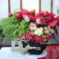 聖誕節盆花【HA023】