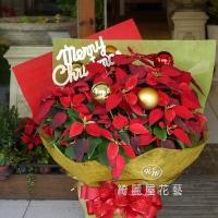 聖誕節盆花【HA024】