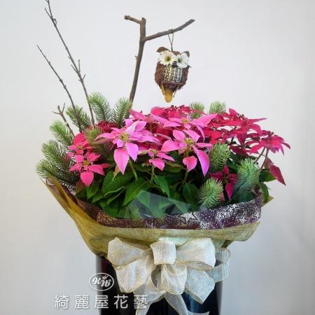 聖誕節盆花【HA025】