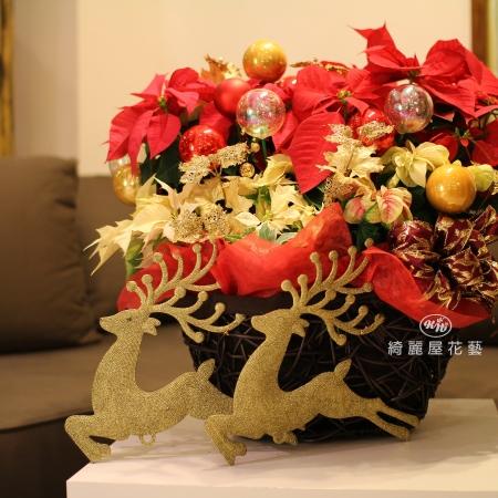 聖誕節盆花【HA026】