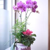藝術型蘭花盆栽【CA055】