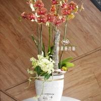 藝術型蘭花盆栽【CA056】