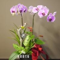 藝術型蘭花盆栽【CA057】