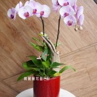 藝術型蘭花盆栽【CA058】
