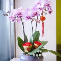 藝術型蘭花盆栽【CA059】