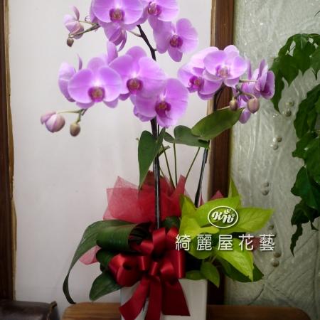 藝術型蘭花盆栽【CA060】