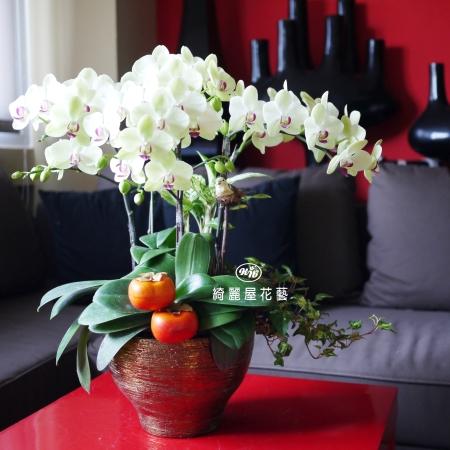 藝術型蘭花盆栽【CA061】