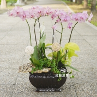 藝術型蘭花盆栽【CA062】