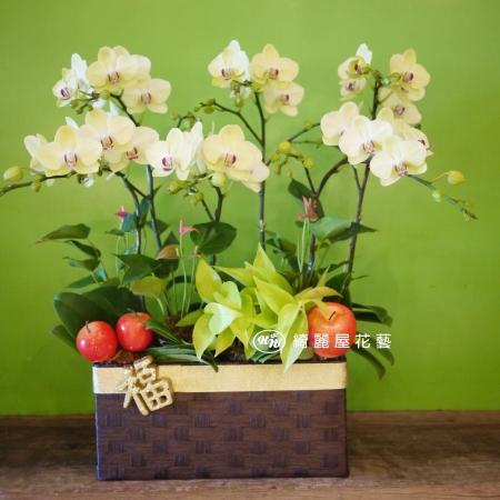 藝術型蘭花盆栽【CA067】