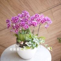 藝術型蘭花盆栽【CA069】