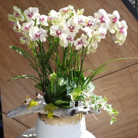 藝術型蘭花盆栽【CA070】