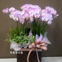 藝術型蘭花盆栽【CA071】