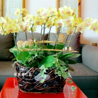 藝術型蘭花盆栽【CA072】
