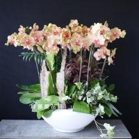 藝術型蘭花盆栽【CA073】