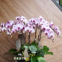 藝術型蘭花盆栽【CA074】