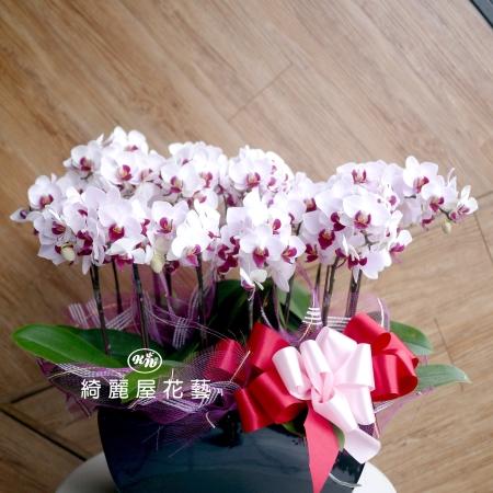 藝術型蘭花盆栽【CA075】