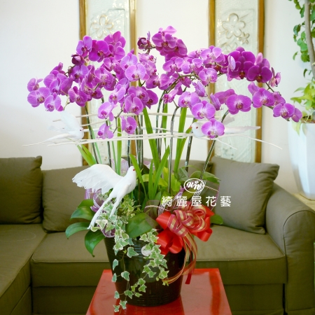藝術型蘭花盆栽【CA077】