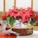 聖誕節花禮上市!多款聖誕花圈、聖誕紅盆栽任你挑│高雄花店綺麗屋