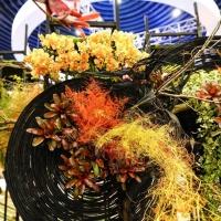 2018台中花博花卉裝置藝術設計展-虛實之間|高雄綺麗屋專業花藝設計12